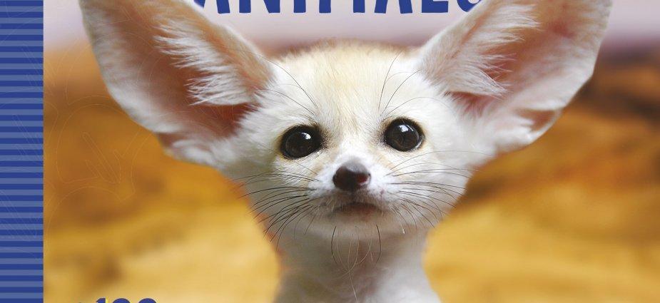 Book-World's-Cutest-Animals-West-End-Magazine
